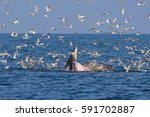 The Family Bryde's Whale...