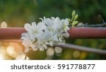 orchid flowers the natural in... | Shutterstock . vector #591778877