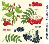 set of berries mix raster... | Shutterstock . vector #591807137