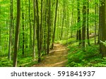 path through natural forest of... | Shutterstock . vector #591841937
