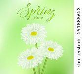 universal spring green abstract ...   Shutterstock .eps vector #591888653