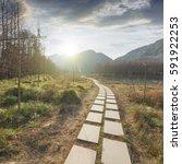 sunset in the woods corridor | Shutterstock . vector #591922253