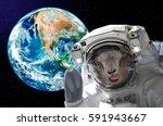 portrait of a goat astronaut ...   Shutterstock . vector #591943667