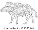 adult coloring book wild boar... | Shutterstock .eps vector #591949967