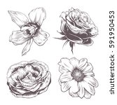 set of vintage vector flowers... | Shutterstock .eps vector #591950453