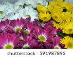 Big Bouquet Of Chrysanthemums