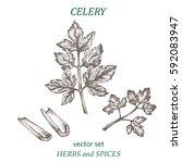 celery. botanical illustration. ... | Shutterstock .eps vector #592083947