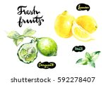 fresh fruits watercolor... | Shutterstock . vector #592278407