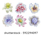 set with flowers. pansies.... | Shutterstock . vector #592294097
