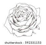 hand drawn illustrations of...   Shutterstock .eps vector #592331153