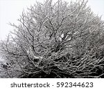 Small photo of Snow accumulated on tree branches