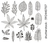 set tropical leaves  black and... | Shutterstock .eps vector #592440707