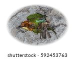 top view and close up photo of...   Shutterstock . vector #592453763