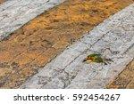 close up photo of bird carcass...   Shutterstock . vector #592454267