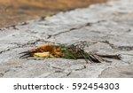 close up photo of bird carcass...   Shutterstock . vector #592454303