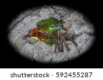 top view and close up photo of...   Shutterstock . vector #592455287