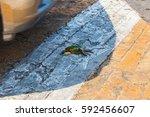 event simulation of bird...   Shutterstock . vector #592456607