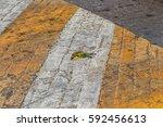 event simulation of bird...   Shutterstock . vector #592456613
