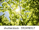 Spring Leaves Background With...