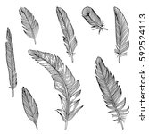 writing feathers collection  | Shutterstock .eps vector #592524113