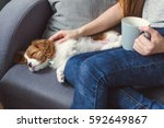 puppy on the couch near the... | Shutterstock . vector #592649867