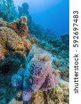 Small photo of Azure vase sponge, Callyspongia plicifera off the coast of Bonaire, underwater