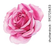 rose bud closeup. watercolor... | Shutterstock . vector #592725653