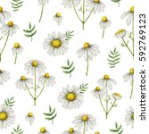 watercolor chamomile seamless... | Shutterstock . vector #592769123