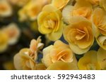 Nature Spring Floral Backgroun...