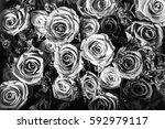 Stock photo black and white background of flowers roses 592979117
