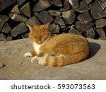 the ginger cat warming itself... | Shutterstock . vector #593073563