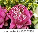 Beautiful Pink Lotus Flowers...