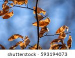 Autumn Leafs On A Branch With...