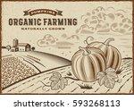 pumpkin organic farming... | Shutterstock . vector #593268113