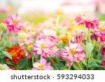 Pink Floral In Garden   Flower...