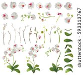 orchid tropical flowers floral... | Shutterstock .eps vector #593313767