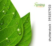 macro view green leaves with... | Shutterstock .eps vector #593357933