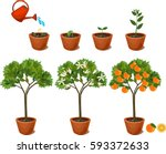 plant growing from seed to... | Shutterstock .eps vector #593372633