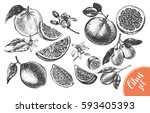 ink hand drawn set of different ... | Shutterstock .eps vector #593405393
