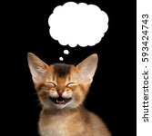Small photo of Laughs Abyssinian Kitty with closed eyes think funny in cloud on Isolated Black Background
