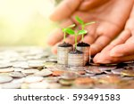 seedlings are grown on a coin... | Shutterstock . vector #593491583