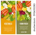 organic vegetable farming... | Shutterstock .eps vector #593653283