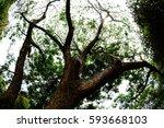 view | Shutterstock . vector #593668103