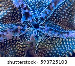 close up detail of the... | Shutterstock . vector #593725103