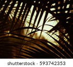 leaf background tropical... | Shutterstock . vector #593742353