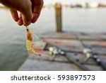Small Prawns Are Used As Bait...