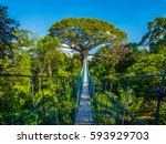 the path to mother earth  on a... | Shutterstock . vector #593929703