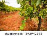 Hunter Valley  Australia. Well...