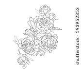 sketch of beautiful peonies on... | Shutterstock .eps vector #593952353