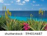 blossoming  yellow flowers aloe ... | Shutterstock . vector #594014687